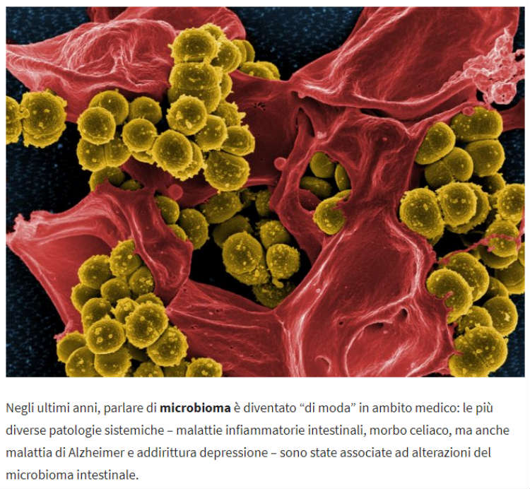 Microbioma 2